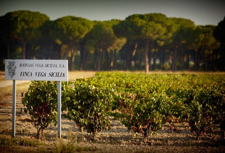 Degustace Vega Sicilia & Oremus Tokaj